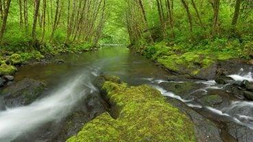 Çağla Yeşili ve Doğa
