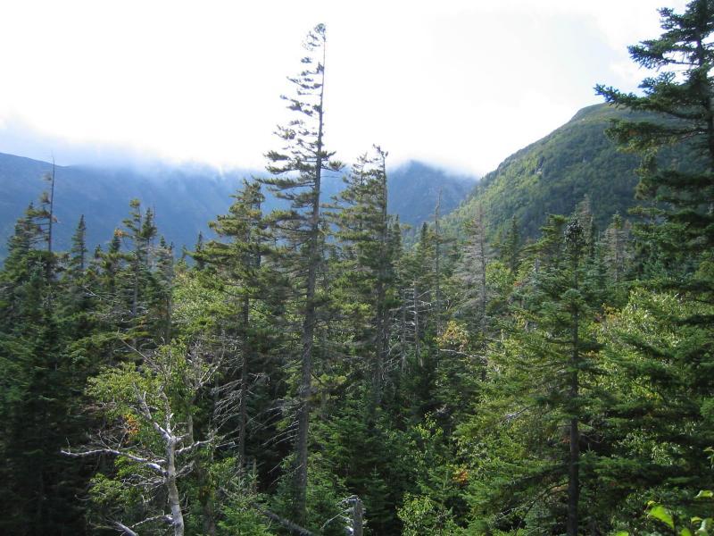 Çam Ağaçları ve Arkasındaki Sisli Dağlar