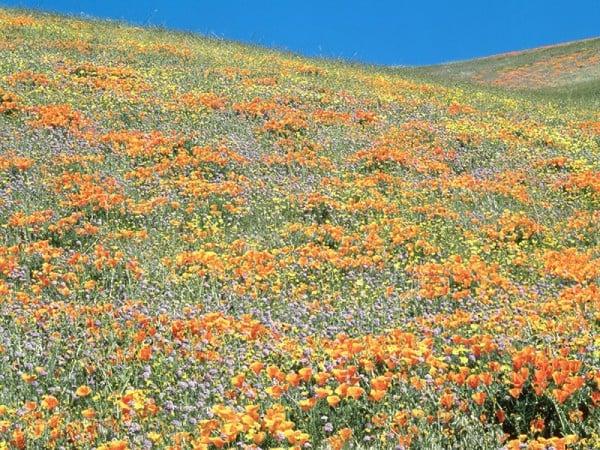 Çiçek tarlası manzarası