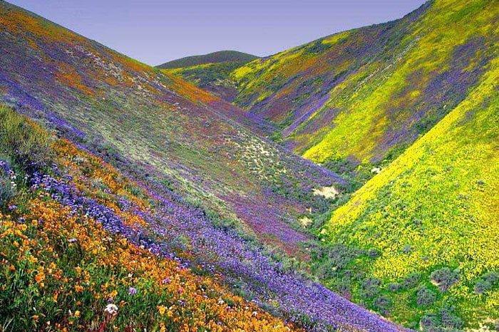Çiçekli Dağlar