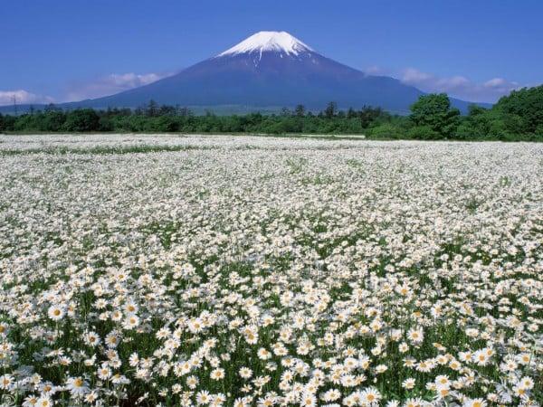 Çiçekli dağ manzarası