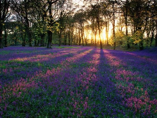 Çiçekli gün batımı