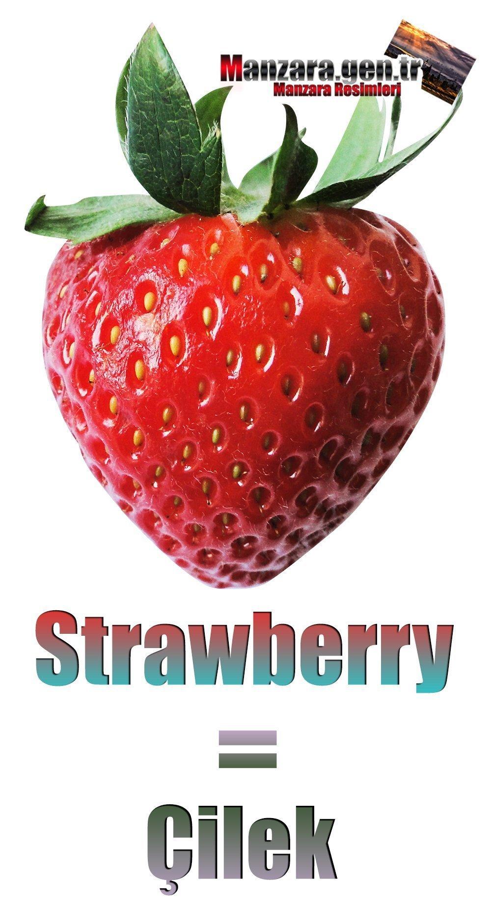 Çileğin İngilizcesi (Strawberry)