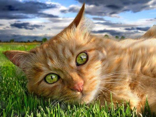 Kedilerin Farklı Halleri