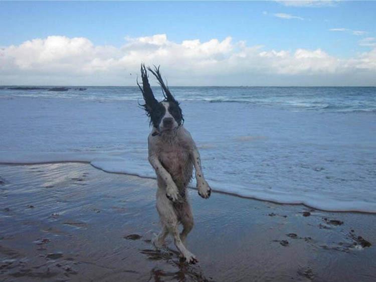 Komik Köpek Fotoğrafları