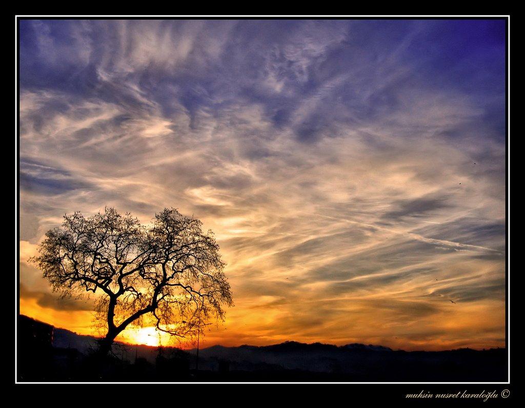 çınar ağacı ve gün batımı