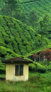 çay bahçesi 1080x1920