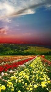 çiçek bahçesi 1080x1920