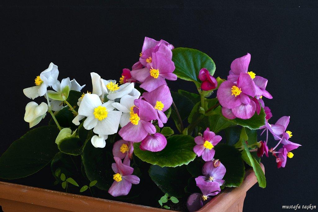 çiçek fotoğrafları – 2
