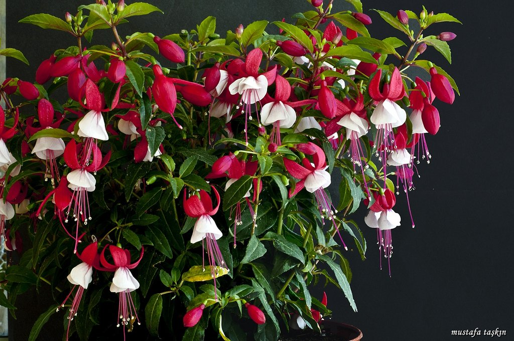 çiçek fotoğrafları – 3