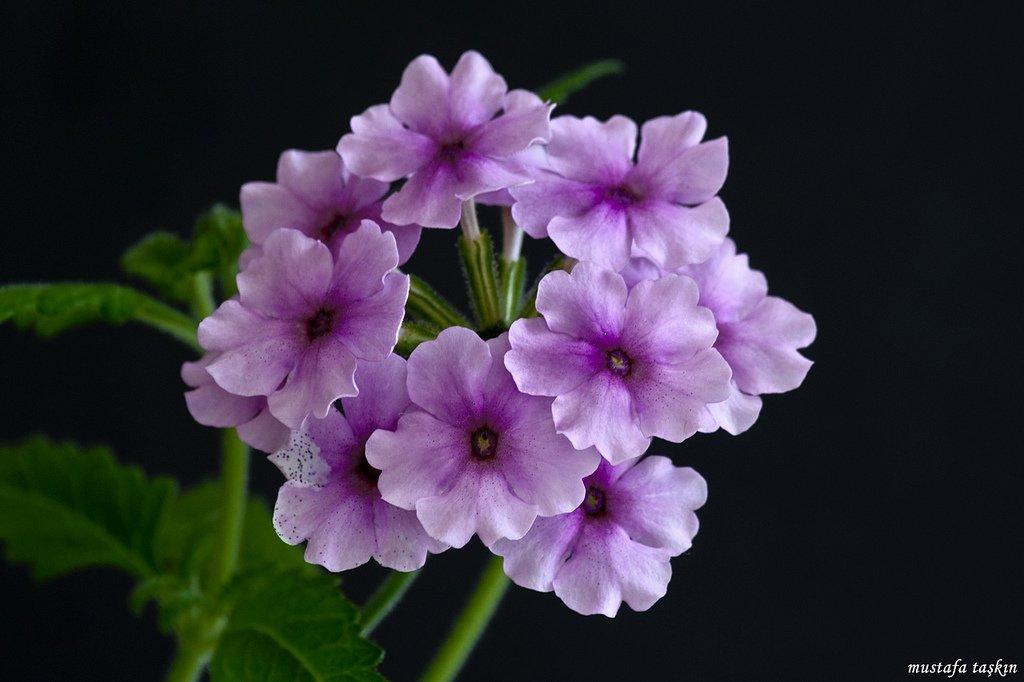 çiçek fotoğrafları – 4