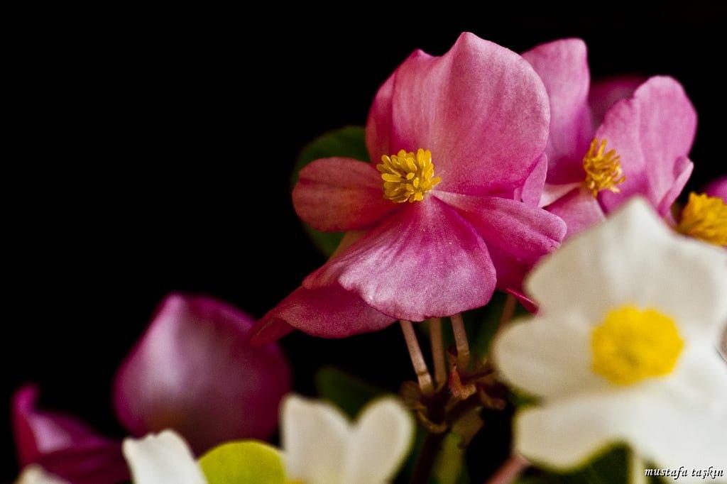 çiçek fotoğrafları – 5