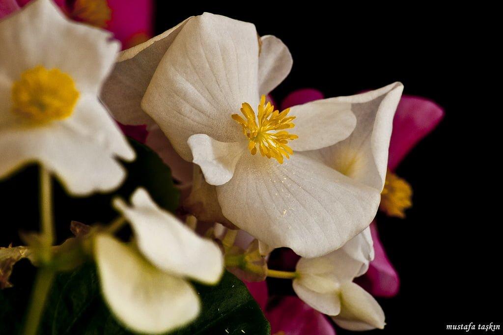 çiçek fotoğrafları – 6