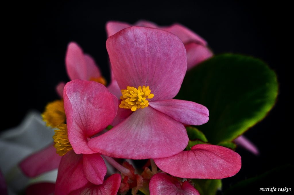 çiçek fotoğrafları – 7