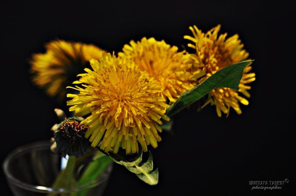 çiçek fotoğrafları – 8