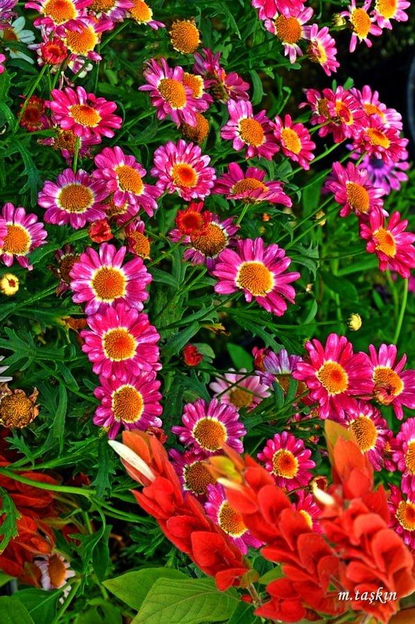 çiçek fotoğrafları – 9