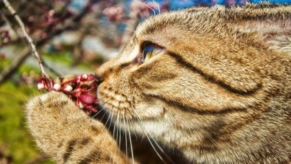 çiçek koklayan kedi