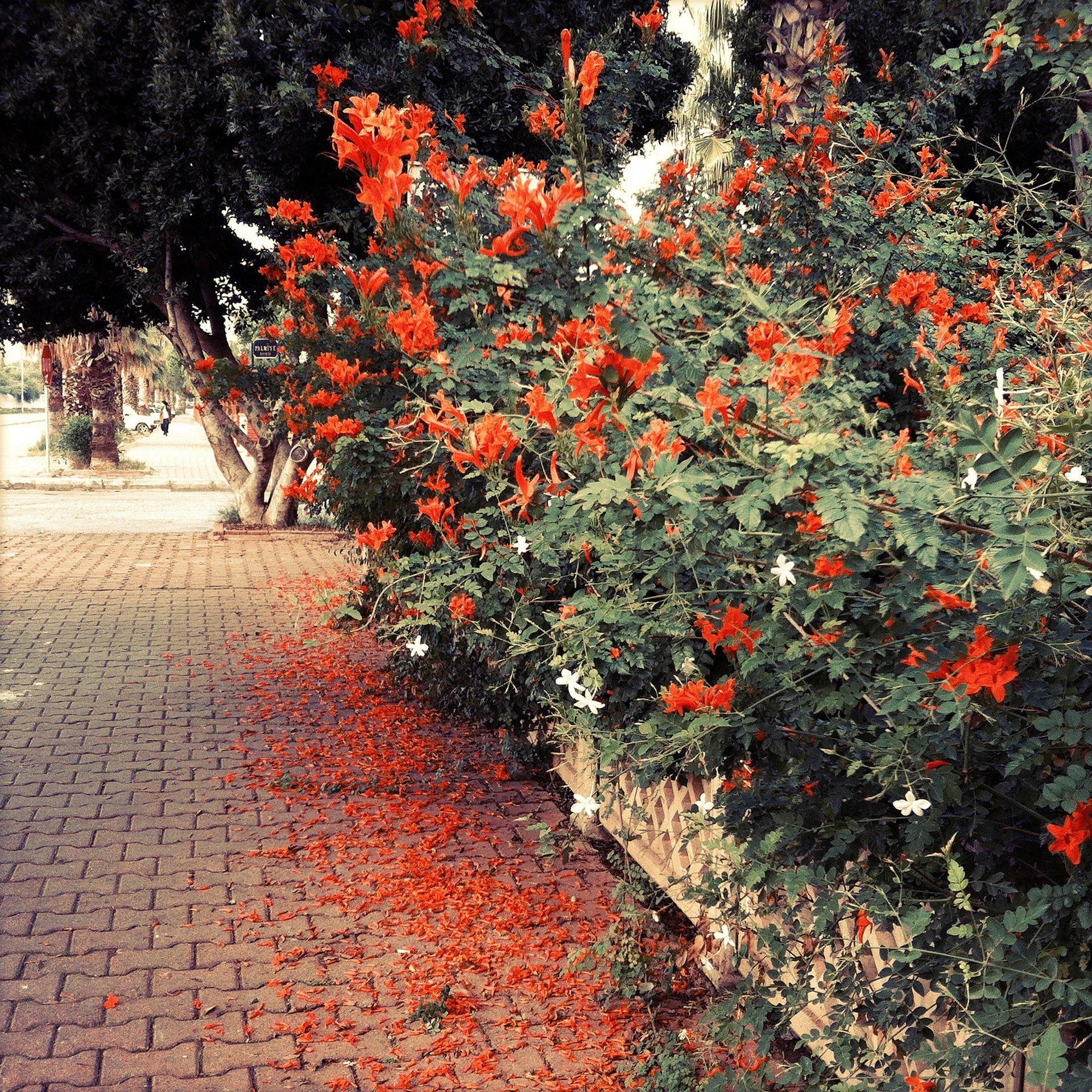 çiçekli sokaklar