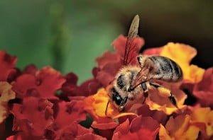 çiçekteki işçi arı - 2