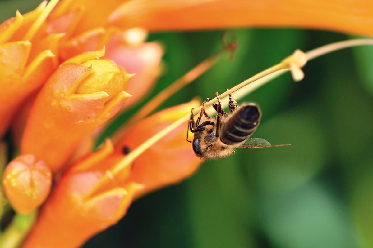 çiçekteki işçi arı
