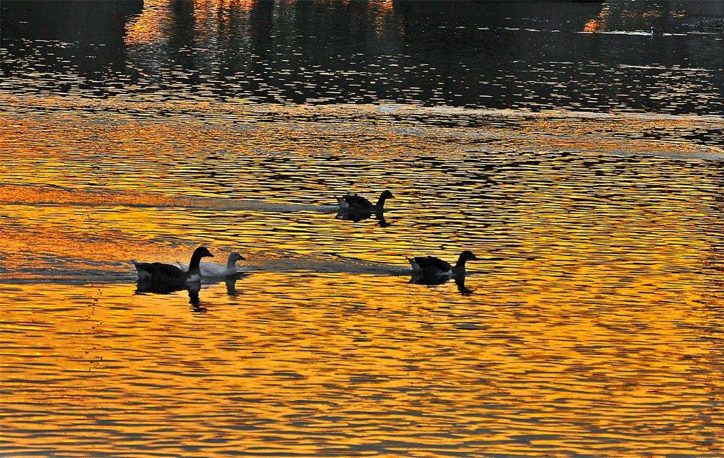 ördek fotoğrafları