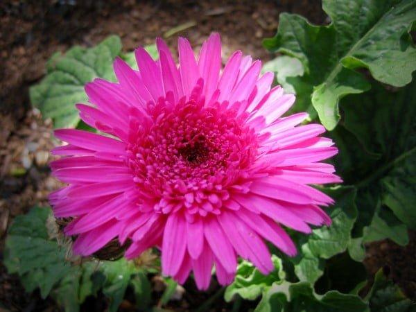 özel pembe çiçek