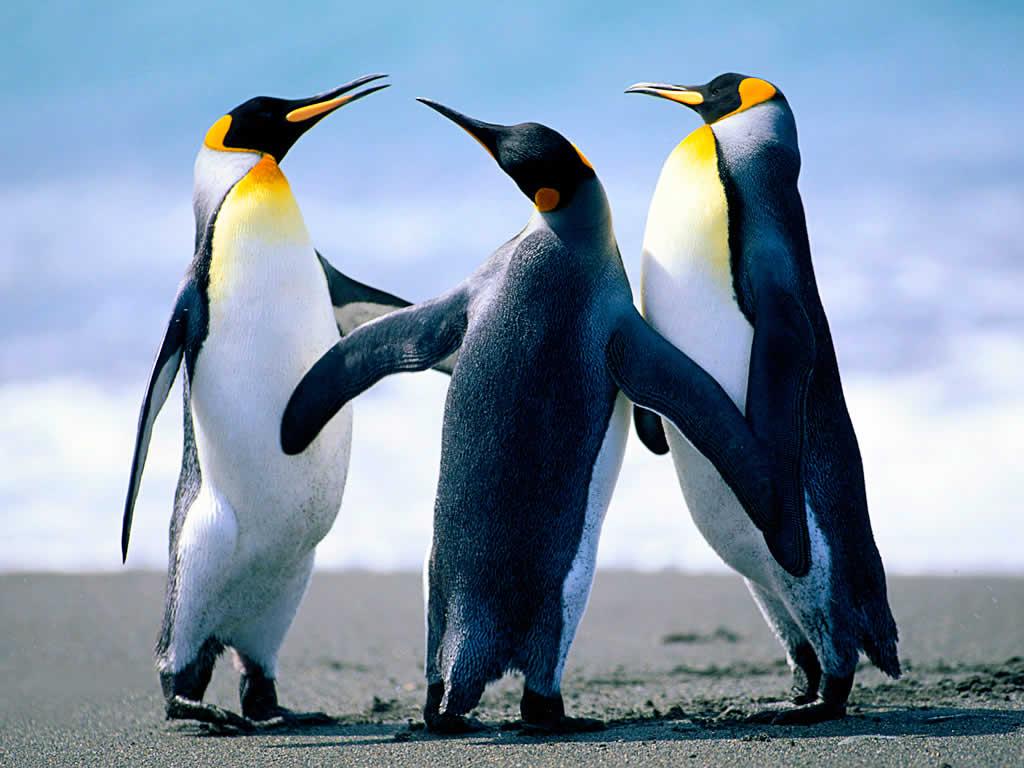 üçüz penguenler