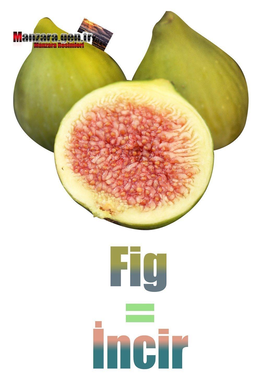 İncirin İngilizcesi (Fig)