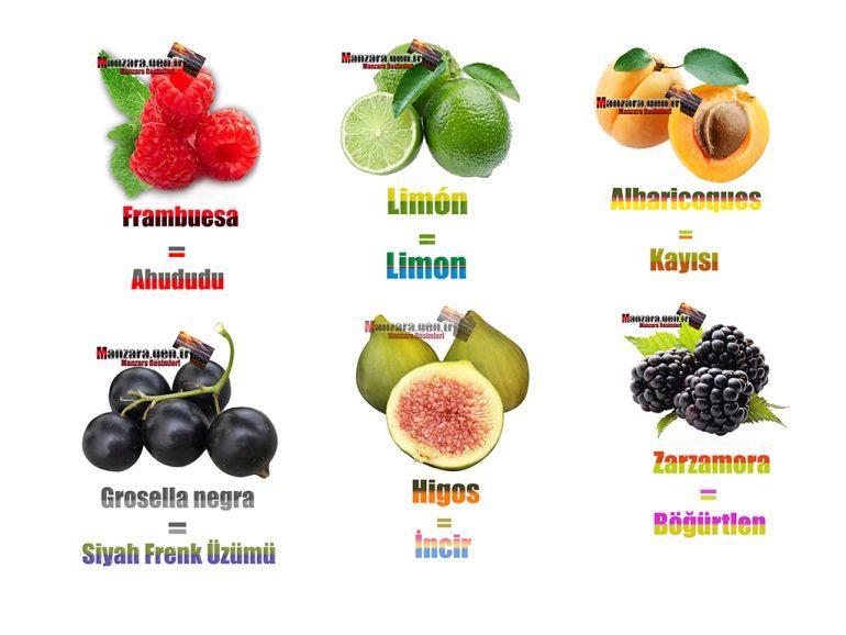İspanyolca Meyve İsimleri
