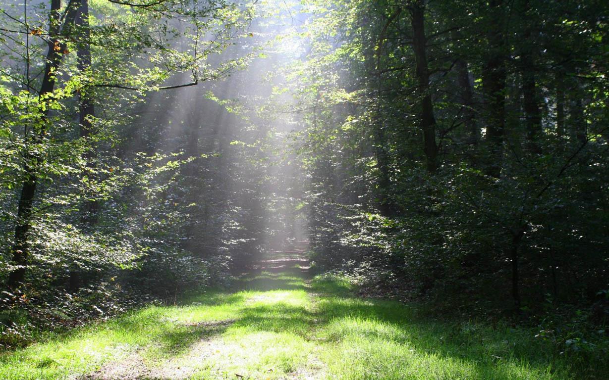 ışığın içindeki yol