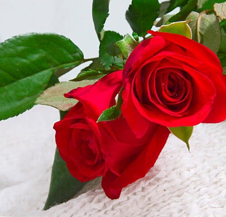 şahane güller