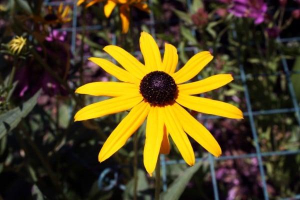 13 yapraklı sarı çiçek
