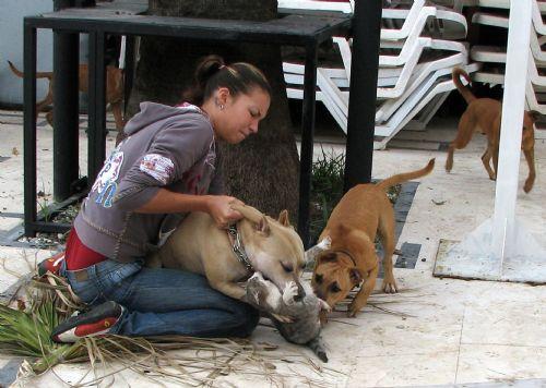 2008 yılının basın fotoğrafları - pitbull faciası