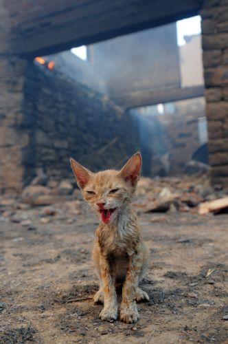 Yılın basın fotoğrafları - 2008 - yandık