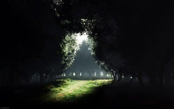 Ağaç ışıltısı