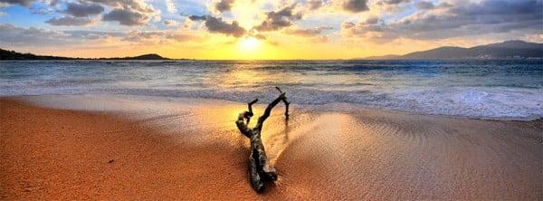 Ağaç Kovuğu ve Sahil Facebook Kapağı