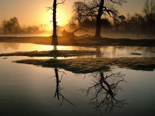 Ağaç Yansımalı Gün Batımı