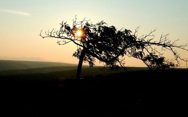 Ağaç içindeki gün batımı
