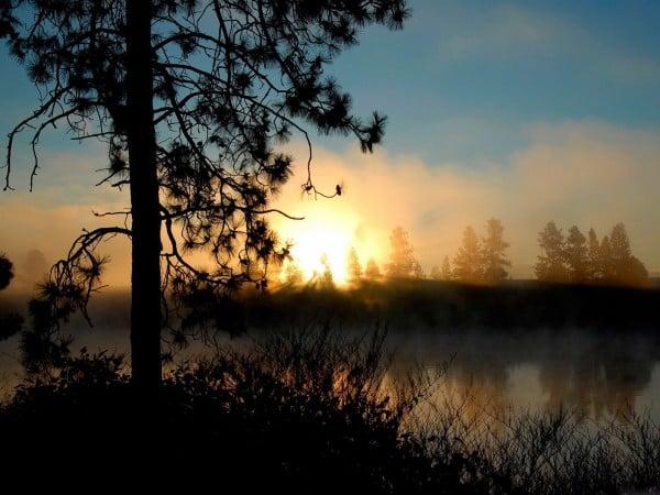 Ağaç silüetinde gün batımı