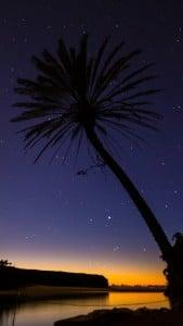 Ağaç ve Yıldızlar iPhone 6