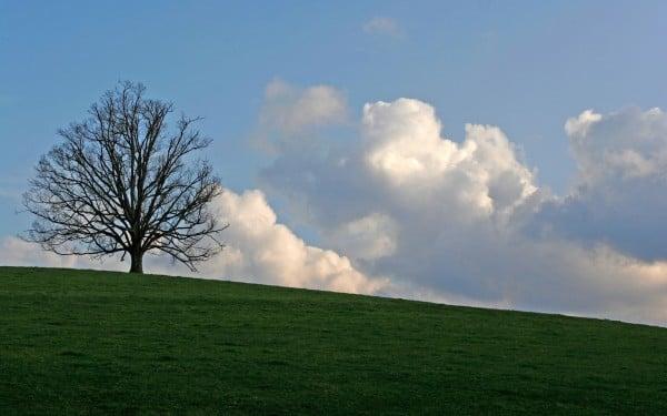 Ağaç ve bulut