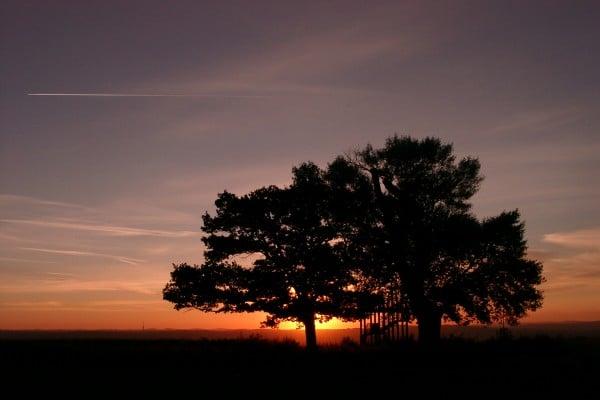 Ağaç ve kızıl gün batımı