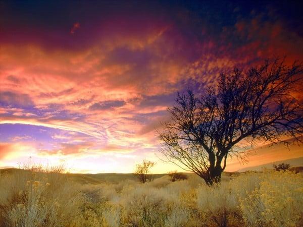 Ağaçlı süper gün batımı