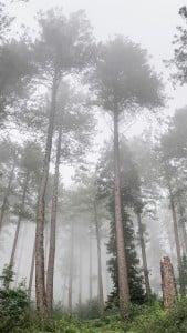 Ağaçlar iPhone 6