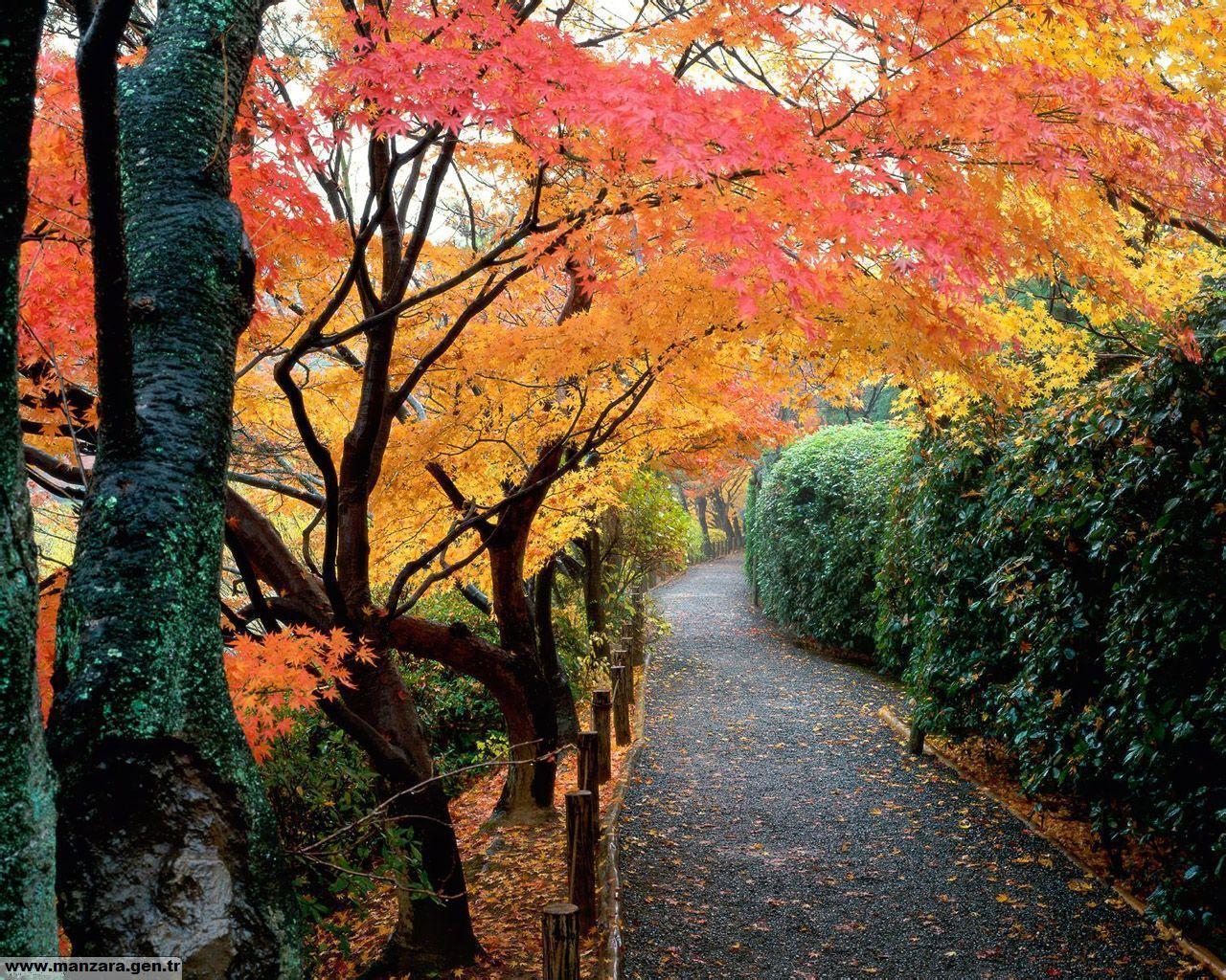 Ağaçlarla Kaplı Sonbahar Yolu