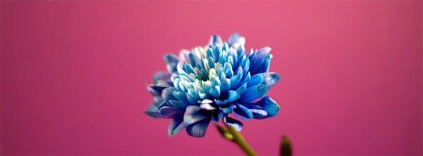 Aşk Çiçeği Facebook Kapağı