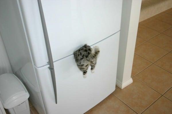 Acıkan kedi