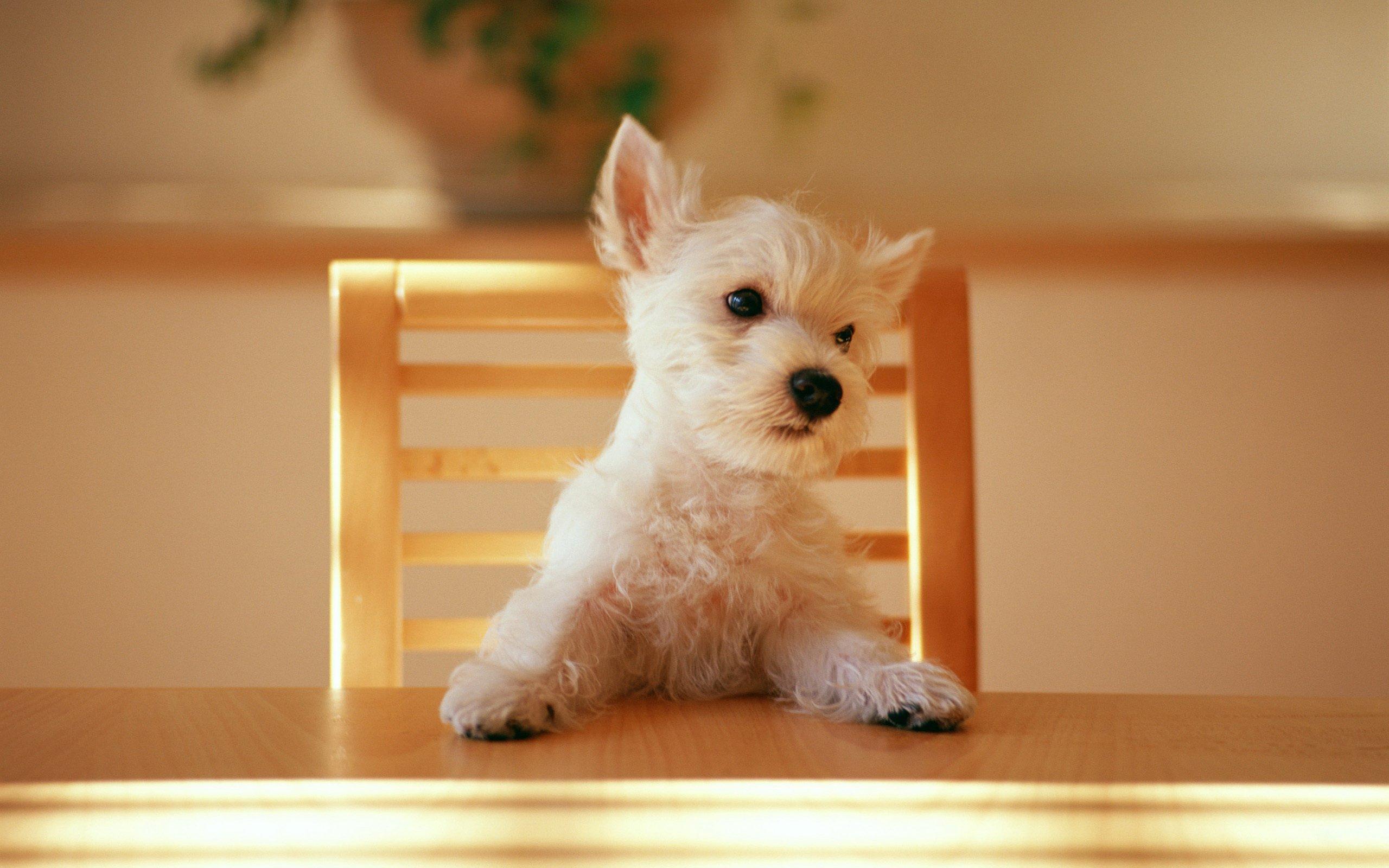 Acıkmış Köpek