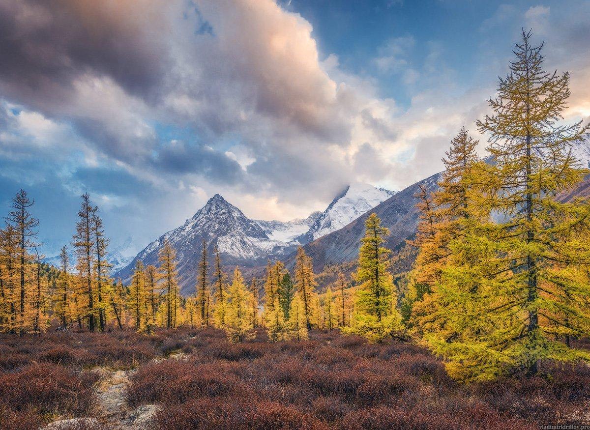 Altay Dağları Ormanlar
