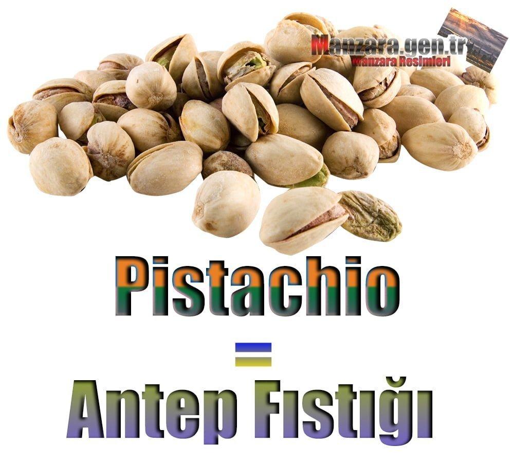 Antep Fıstığı İngilizcesi (Pistachio)
